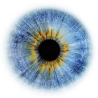 Радиально-кольцевое строение человеческого глаза